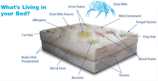 mattress mould and bugs