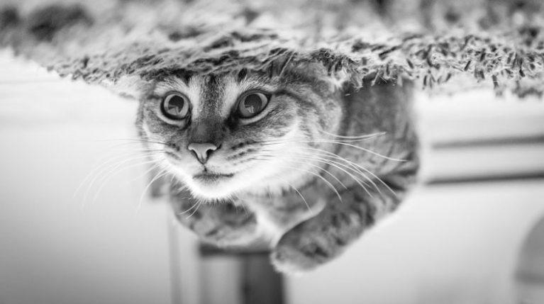 imagen invertida de un gato jugando en el suelo