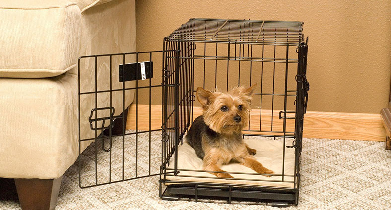 little dog in a crate
