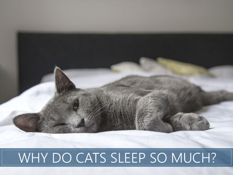 How Many Hours A Day Do Cats Sleep Why Do They Sleep So Much