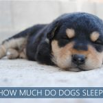 how much do dogs sleep