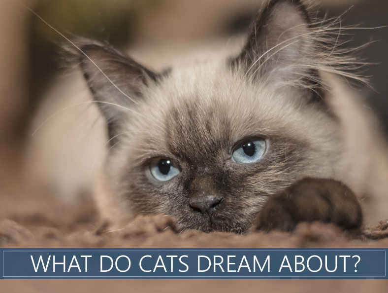 what do cats dream about