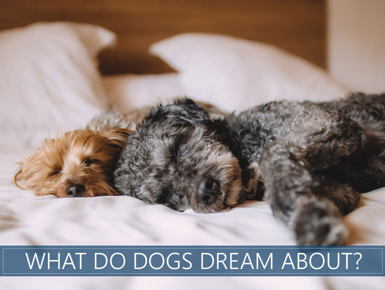 what do dogs dream about