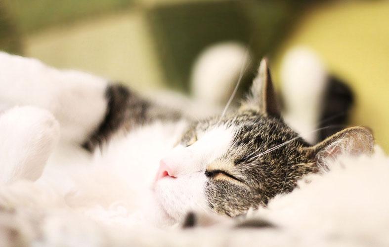 cat is sleeping in home