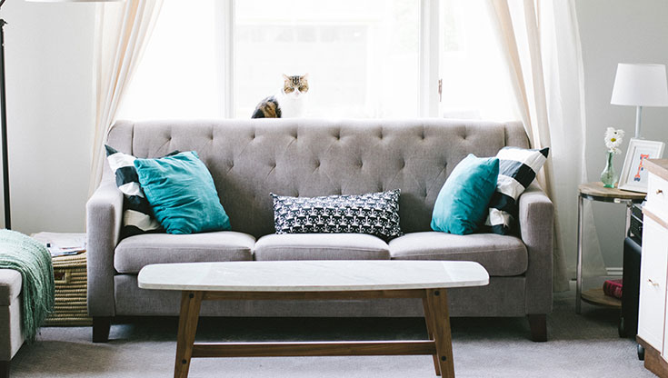 grey couch with turquoise pillows and a cat on the top