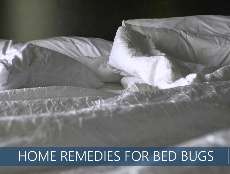 Homemade Bed Bug Remedies How To Repel And Get Rid Of Them