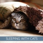Sleeping with cats image