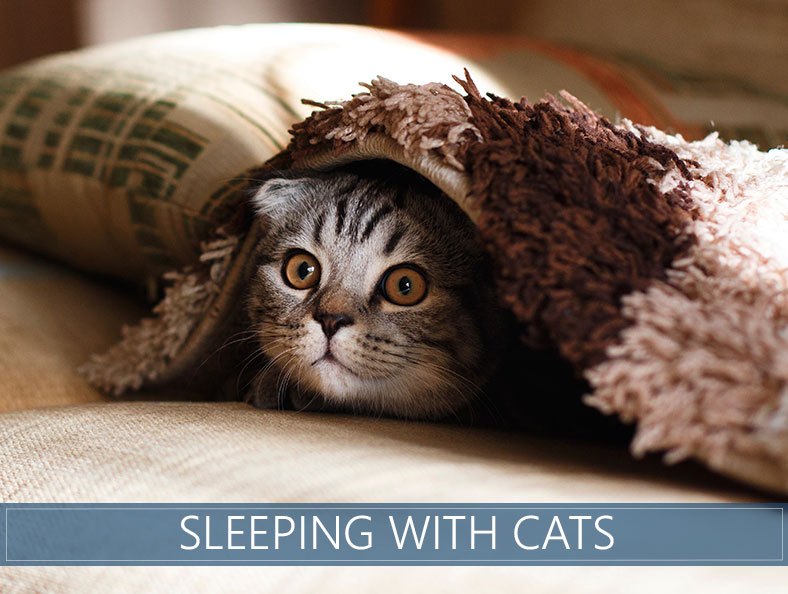 Sleeping with Cats at Night - The Pros & Cons | The Sleep
