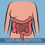 digestive system and sleeping
