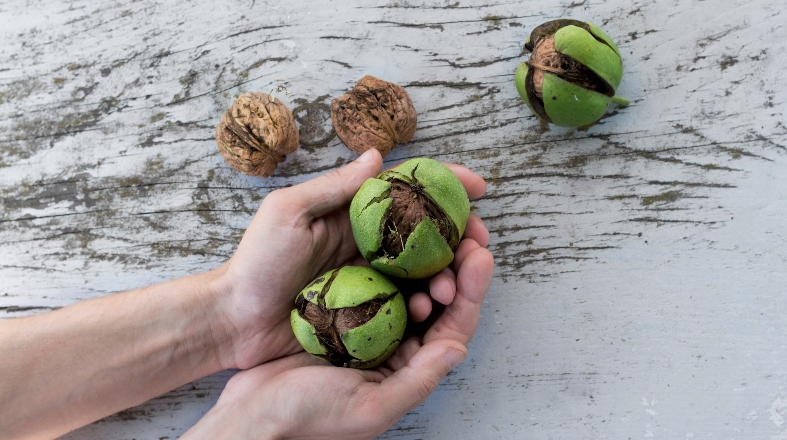 photo of hands holding fresh walnuts