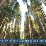planting trees by avocado green mattress