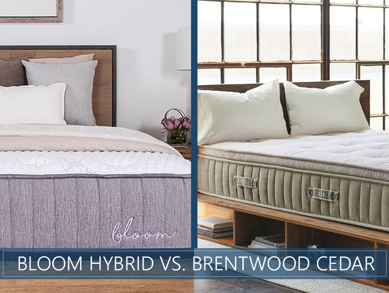 our comparison of bloom hybrid and brentwood cedar