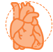 Heart Icon White Background