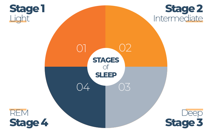 Chart of Sleep Cycle