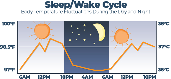 Body Temperature Fluctuations During the Day and Night Graph