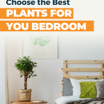 Bedroom Friendly Houseplants
