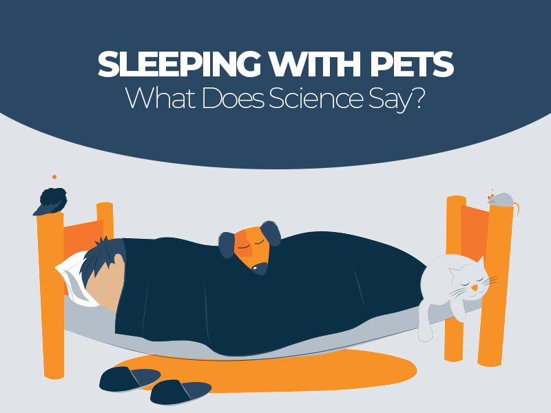 Pros and Cons of Sleeping With Pets Into Your Bed