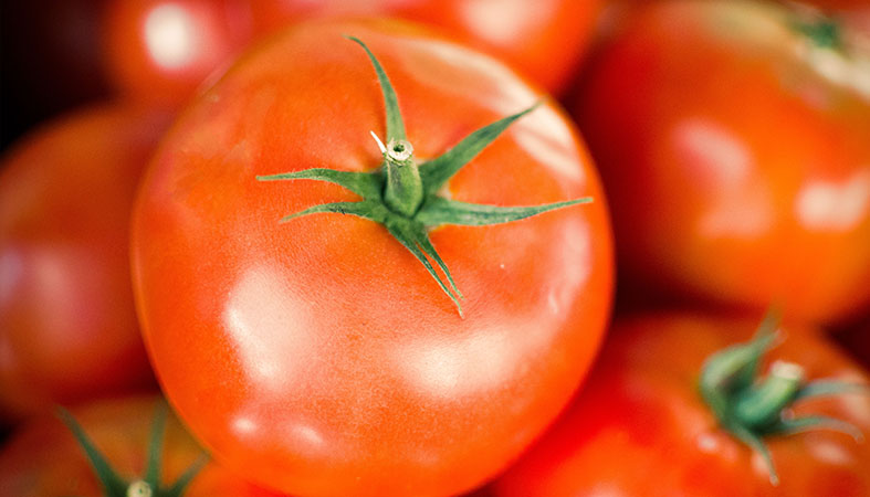close up photo of tomatoes