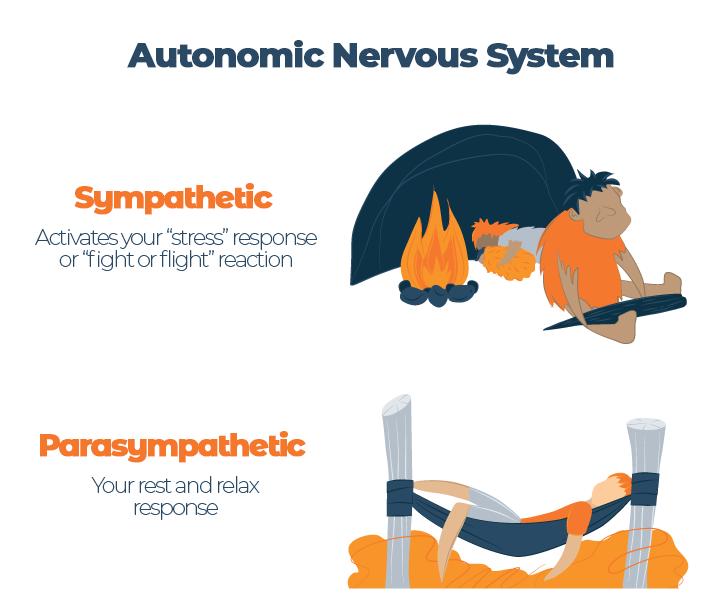 Illustration of Autonomic Nervous System Response