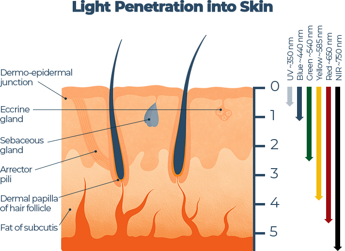 Light Penetration into Skin Graph