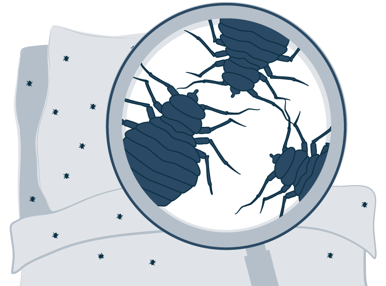 Illustration of Bed Bugs