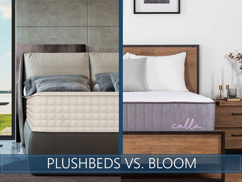 comparison of plushbeds and bloom mattress