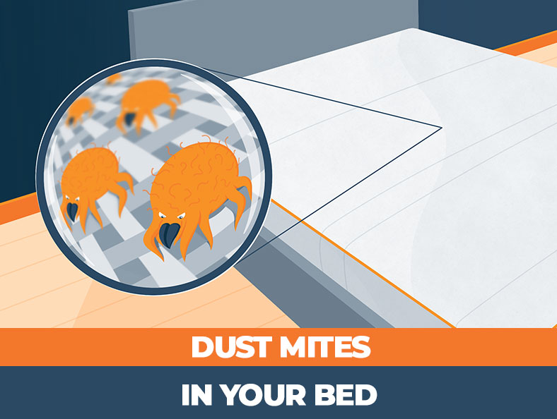 tips on how to get rid of dust mites in your bed